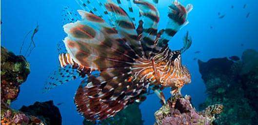 Things to do in aqaba what to do in aqaba activities in for Aqaba dive